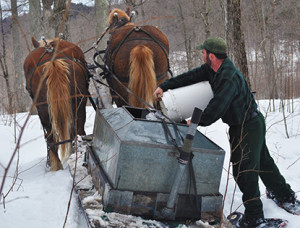 Pouring-sap-into-sled-(3)